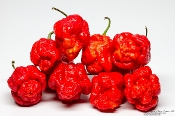 Trinidad Scorpion Moruga Fresh Peppers - 1 SFRB