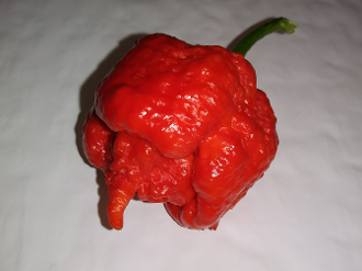 Butch T Reaper Scorpion Red Fresh Peppers - 1 SFRB