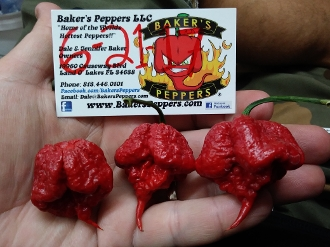 The Reaper Red - 20+ Seeds