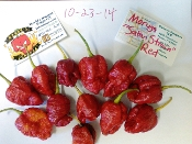 "TS Moruga ""Satan Strain"" Red - 20+ Seeds"