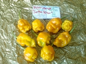 "TS Moruga ""Satan Strain"" Yellow - 20+ Seeds"